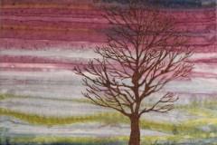 Solitary Tree at Twilight